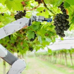 robotic arm picking grapes